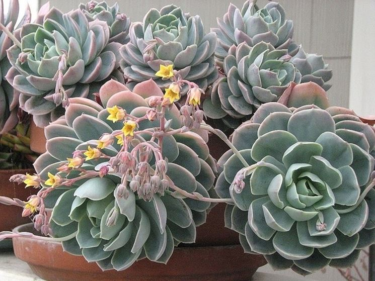 Piante da casa piante appartamento piante da appartamento for Arredare con le piante da interno
