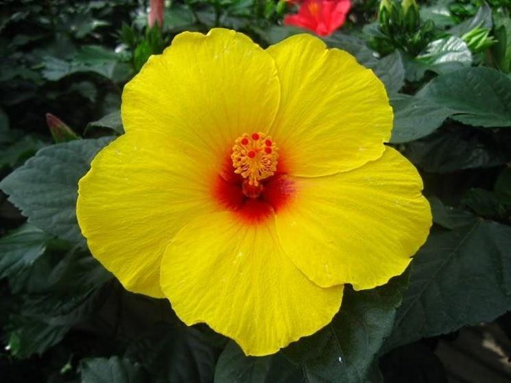 Piante da fiore piante appartamento piante da fiore for Piante e fiori da appartamento