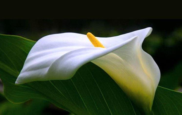 Piante Fiorite Tutto L Anno : Piante da fiore appartamento