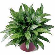 Un esempio di piante da interno