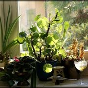 piante in piena luce