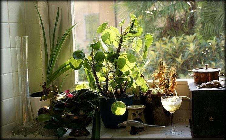 piante di casa - piante appartamento - caratteristiche delle piante