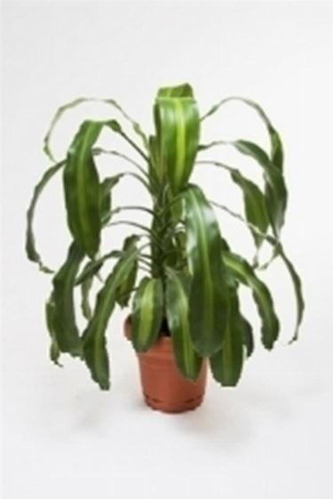 Un esempio di pianta in vaso