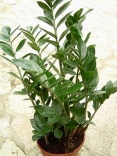 Un altro esempio di pianta in vaso