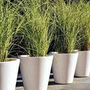 piante in vaso - piante appartamento - Piante Sempreverdi Da Vaso Balcone