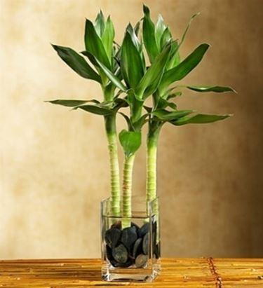 Un esempio di pianta ornamentale