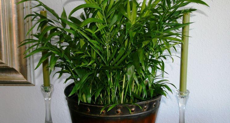 piante per interni piante appartamento piante da interno