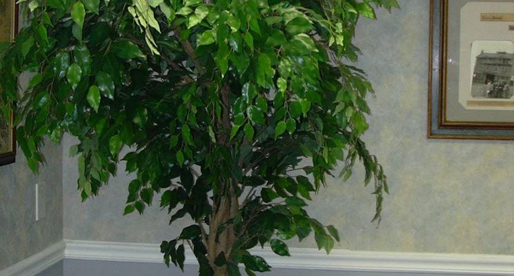 Piante per interni - piante appartamento - Piante da interno