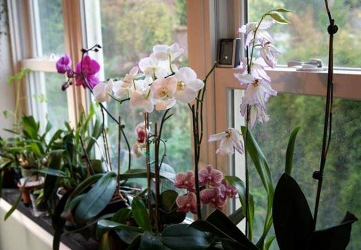 Fiori nelle vicinanze di una finestra
