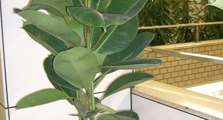 Piante verdi da appartamento - piante appartamento - Come scegliere le piante verdi da appartamento