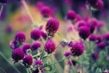 Un esempio di fiore che troviamo sulle piante di Pothos