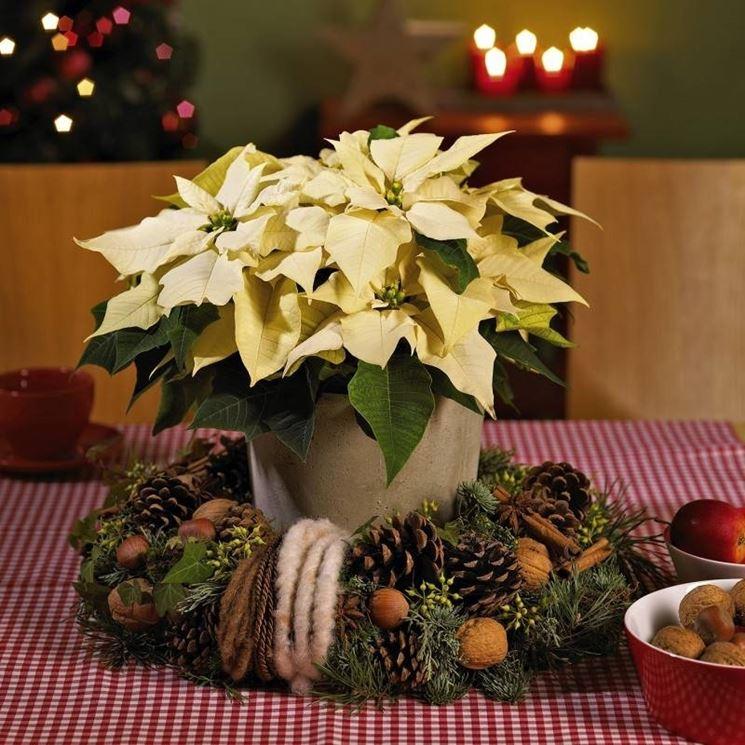 Una stella di Natale come centro tavola