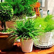 Specie piante interno