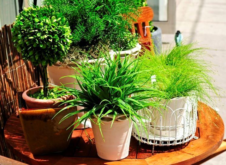 Tipologie di piante da interno piante appartamento for Portavaso pensile