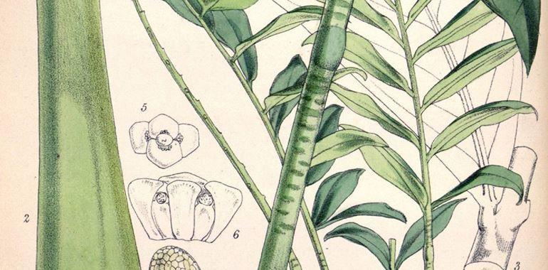 <h6>Zamioculcas</h6>Denominata la pianta di Padre Pio, la Zamioculcas � una pianta che potr� impreziosire anche il vostro appartamento