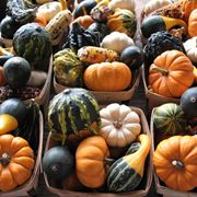 Un insieme colorato di zucche ornamentali