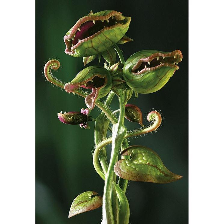 Coltivazione piante carnivore - piante carnivore - Coltivare piante carnivore