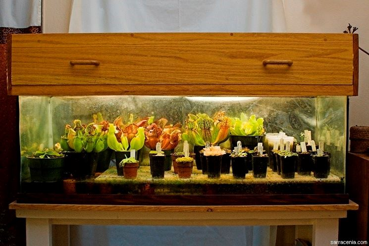 Terraio per piante carnivore con luce artificiale