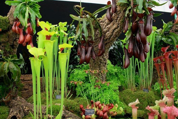 piante carnivore online piante carnivore le piante