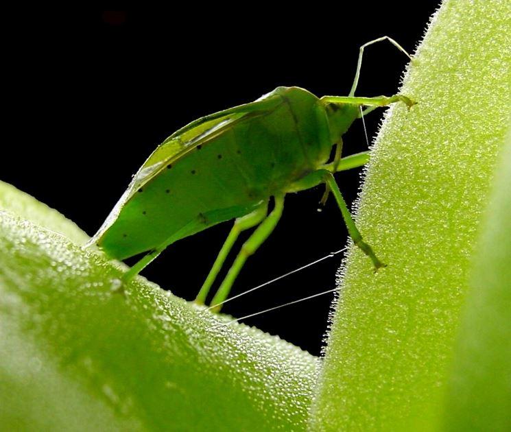 piante insettivore