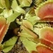 semi piante carnivore
