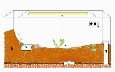 terrario piante carnivore