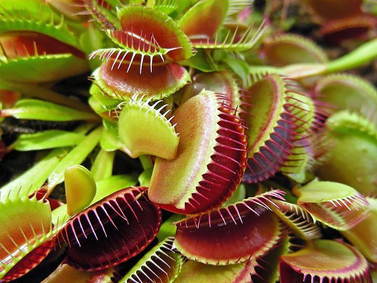 vendita piante carnivore