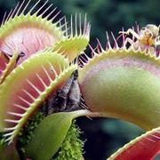 le piante carnivore