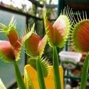 pianta carnivora prezzo