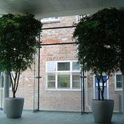 alberi finti