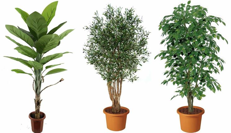 Diversi tipi di piante artificiali