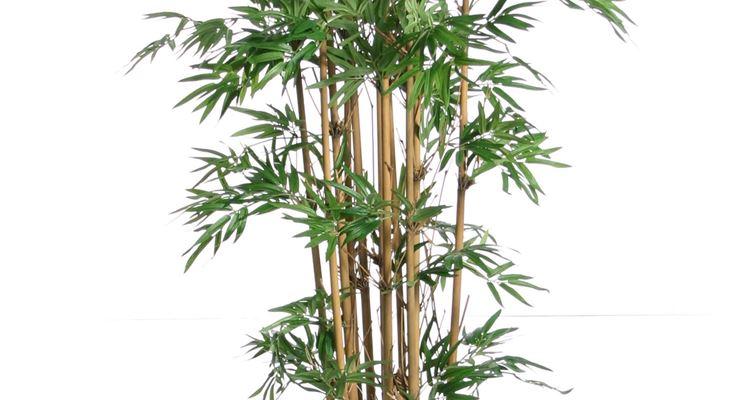 Piante e fiori artificiali - Piante finte - Fiori finti e ...