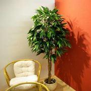 pianta finta mango