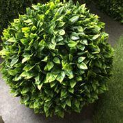 Piante finte da arredo piante finte arredare con le for Siepe artificiale ikea