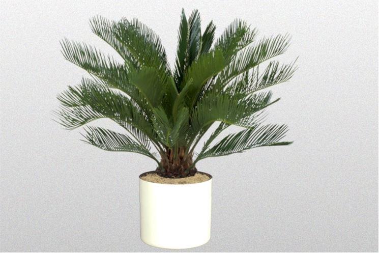 piante finte da appartamento