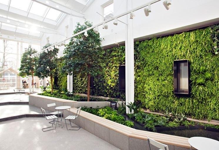 piante stabilizzate da muro
