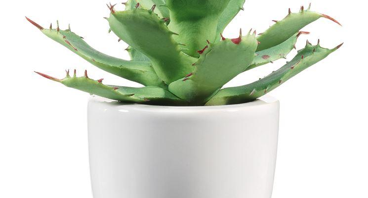 Piante finte on line piante finte vendita piante finte for Vendita piante grasse on line