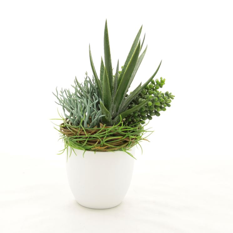 piante grasse finte piante finte piante grasse finte