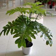 Piante grasse finte piante finte piante grasse finte for Siepe artificiale ikea