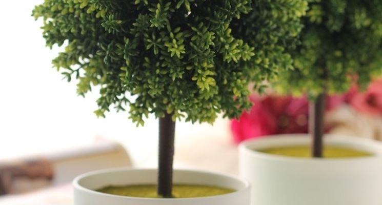 Piante ornamentali finte piante finte piante for Piante ornamentali per esterno