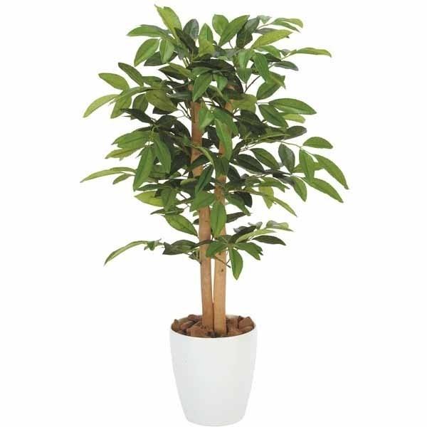 Piante ornamentali finte piante finte piante for Piante sempreverdi da appartamento