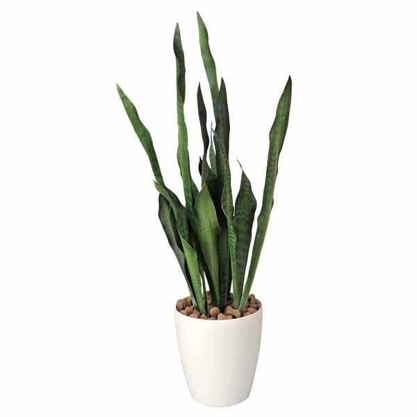 Piante ornamentali finte piante finte piante for Piante grasse ornamentali
