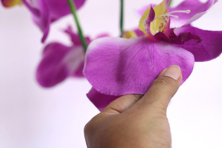 Quasi reale al tatto e alla vista questa orchidea di seta