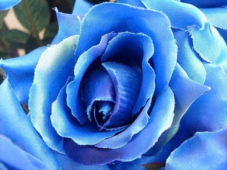 rosa blu di stoffa