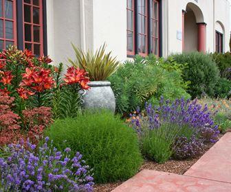 Giardino - Piante basse perenni da giardino ...