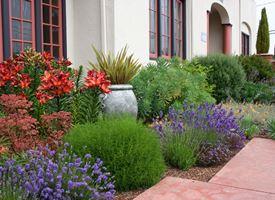 da giardino - Piante Sempreverdi Da Giardino