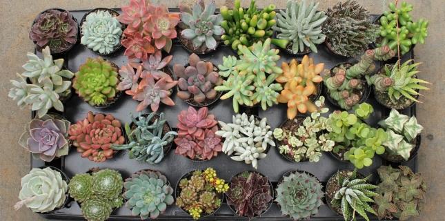 <h6>Piante Grasse</h6>Sezione nella quale si parla di piante grasse, della loro cura e di tutte le curiosit� che riguardano questa particolare sezione di piante succulente