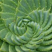 piante grasse nomi