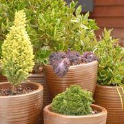 piante perenni da esterno