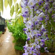 piante sempreverdi con fiori